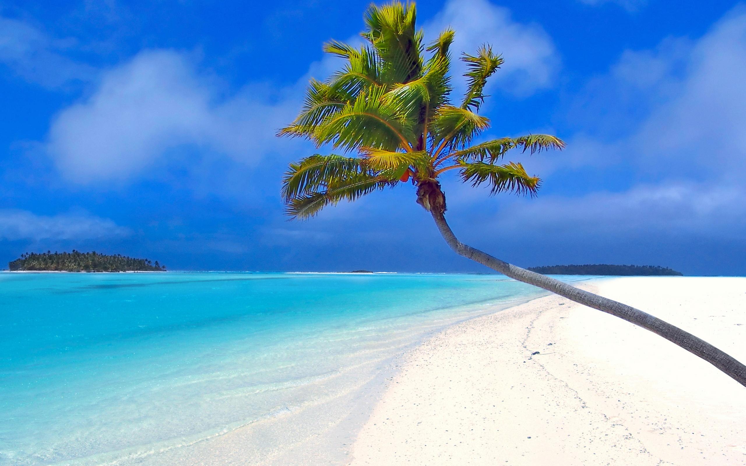 Aventura Marketing Council Download Palm Tree Society Island Beach